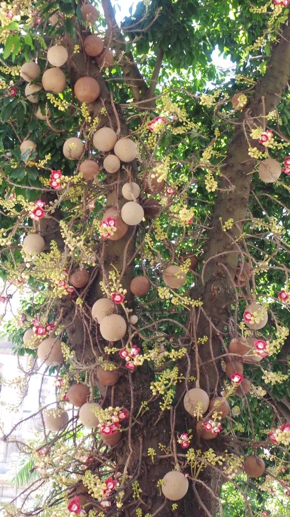 Árvore na Rua São José, no Rio de Janeiro.