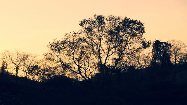 Árvore ao pôr do sol em Miracema (foto do autor).