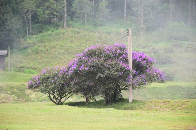 Parque Estadual da Serra do Mar (foto do autor).