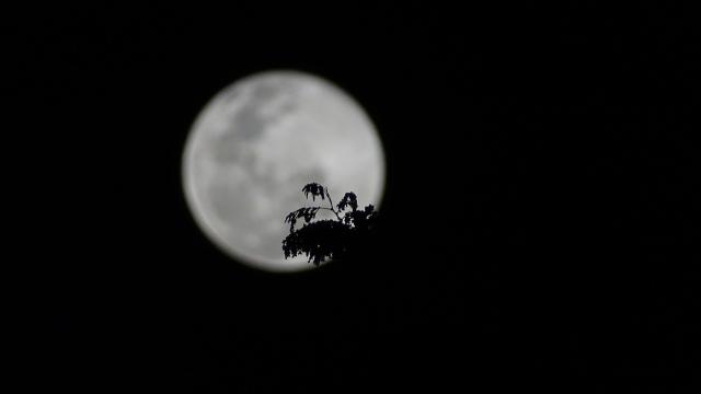 19h01, com interferência de árvore.